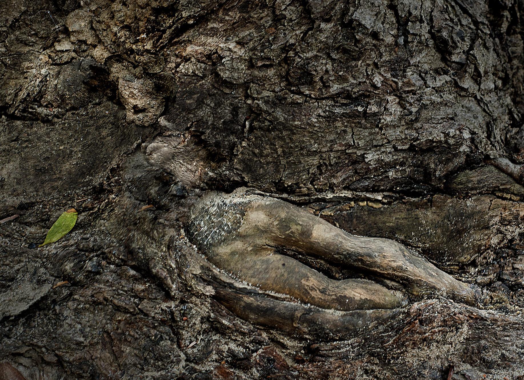 dryads tree spirits vladimir kukorenchuk artwork celeste network