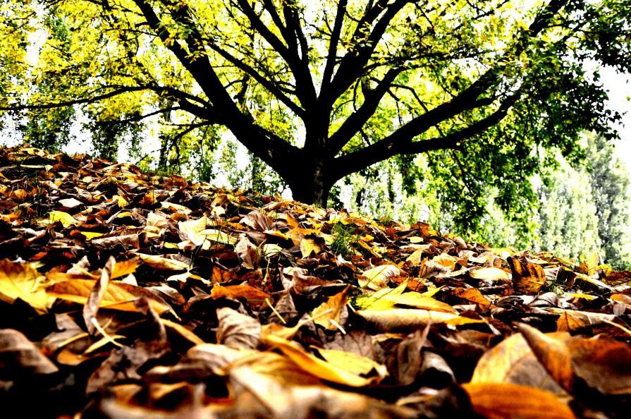 Colori d'autunno - Le foglie