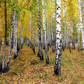 Fall in Ukraine_10
