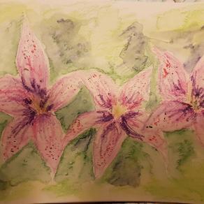 Gigli rosa