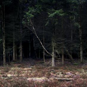 Silent, Dark and Deep Series 2, Image 1