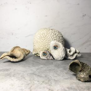 Memento Corallium-still life, still beautiful