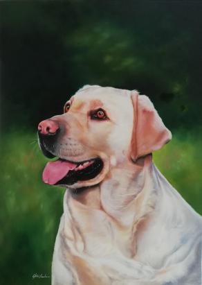 Ritratto del cane labrador Isotta