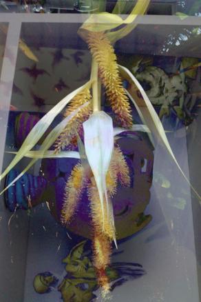 Upright sideways epiphyte