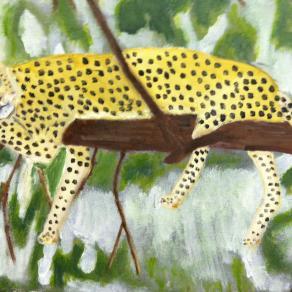 Jaguar of the Rainforest