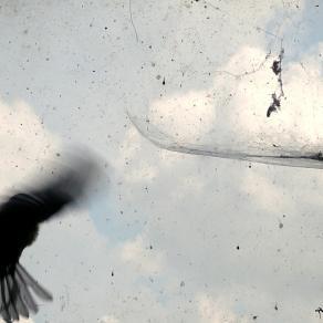 Untitled (the bird)