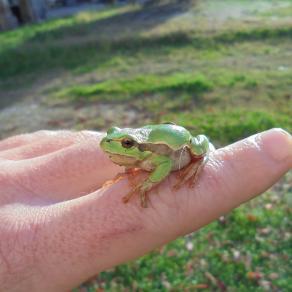 la mia amica verde