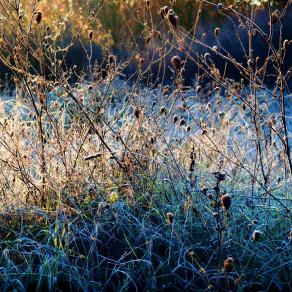 Una fredda mattina   - A cold morning -