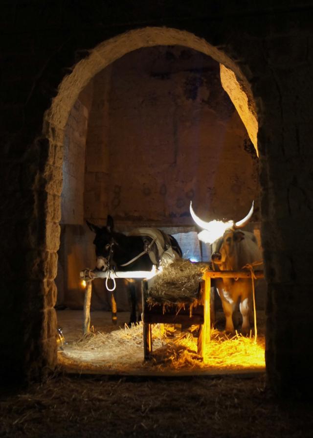 Matera 29 dicembre 2010