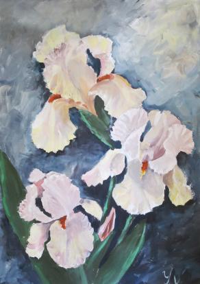 Light irises