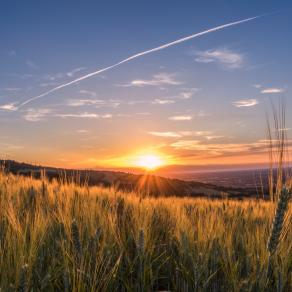 Ricordi di grano
