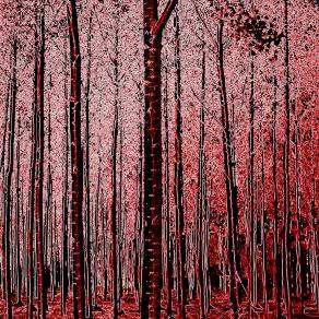 Foresta rossa