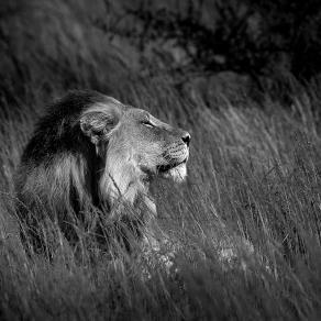 Africa Black & Wild
