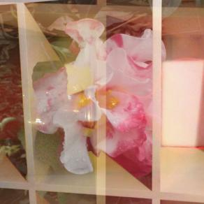 Sideways-camellia heads up