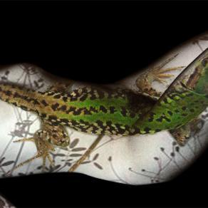 lizard dream